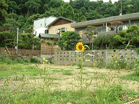 Himawari_garden