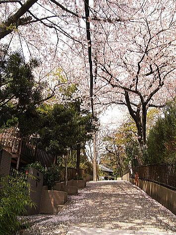 Sakura_1_3