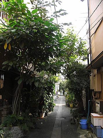 Tsukijima_forest_1