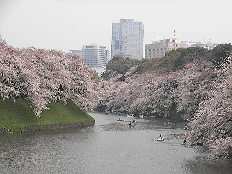 Sakura_chidori_1