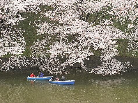 Sakura_chidori_2