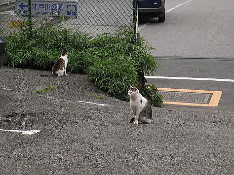 0601_tokyocat