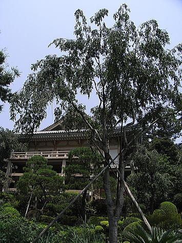 0627_kandagawa4_1
