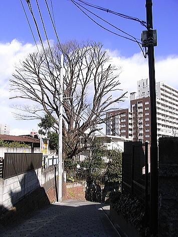 0206_ushigomeyanagisho3_2
