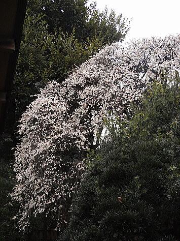 0221_kagura4_2