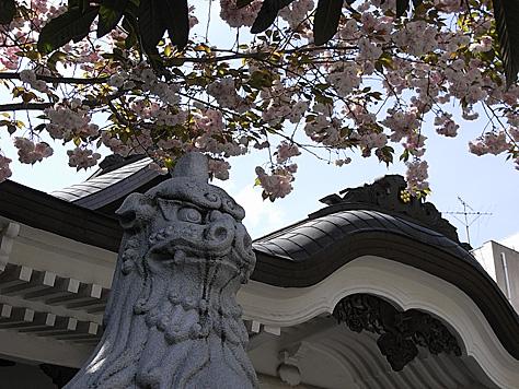 0424_shinokachi5
