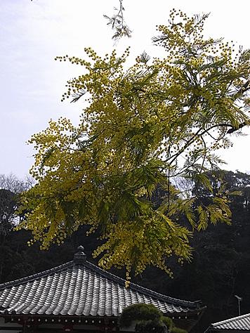 2011_03_20_5441