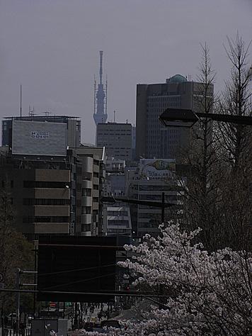 2011_04_10_sakura2_1