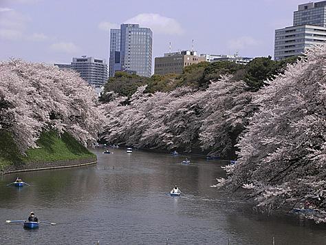 2011_04_10_sakura3